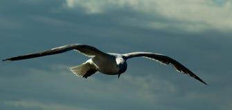 Κατά την πτήση Στοκ φωτογραφίες με δικαίωμα ελεύθερης χρήσης