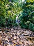 Κατά τη διαδρομή σε μια κρυμμένη θέση στο κολομβιανό τροπικό δάσος Στοκ Εικόνα