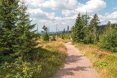 Κατά το ήμισυ νεκρό και ζωντανό δάσος Στοκ Εικόνες