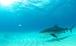 Κατάδυση καρχαριών Στοκ Φωτογραφίες