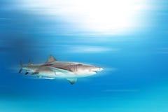 Κατάδυση καρχαριών Στοκ Εικόνα