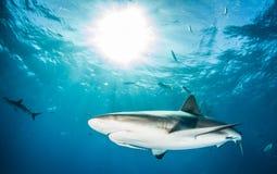 Κατάδυση καρχαριών Στοκ φωτογραφία με δικαίωμα ελεύθερης χρήσης