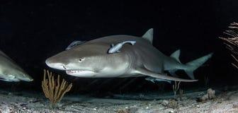 Κατάδυση καρχαριών Στοκ εικόνα με δικαίωμα ελεύθερης χρήσης