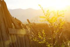 Κατέστρεψε το φράκτη με το βρύο και ένα ζωντανό δέντρο βάζοντας εμπρός τα φύλλα Στοκ Εικόνες