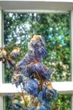 Καταβεβλημένα λουλούδια στοκ φωτογραφία