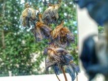 Καταβεβλημένα λουλούδια στοκ εικόνα με δικαίωμα ελεύθερης χρήσης