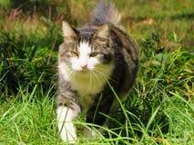 καταδίωξη γατών στοκ φωτογραφία