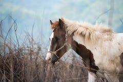 κατανάλωση του αλόγου Ταϊλάνδη χλόης πεδίων Στοκ Εικόνες