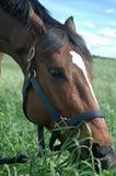 κατανάλωση του αλόγου χλόης Στοκ φωτογραφία με δικαίωμα ελεύθερης χρήσης