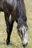 κατανάλωση του αλόγου χ Στοκ Φωτογραφία
