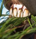 κατανάλωση του αλόγου χ Στοκ φωτογραφίες με δικαίωμα ελεύθερης χρήσης