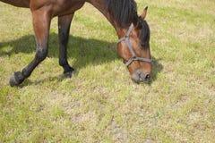 κατανάλωση του αλόγου Στοκ Φωτογραφία