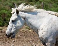 Κατανάλωση του αλόγου Στοκ Εικόνες