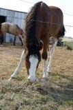 κατανάλωση του αλόγου Στοκ φωτογραφία με δικαίωμα ελεύθερης χρήσης