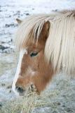 κατανάλωση του αλόγου &sigm Στοκ φωτογραφίες με δικαίωμα ελεύθερης χρήσης
