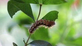 Κατανάλωση του Caterpillar