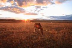 κατανάλωση garss του αλόγου Στοκ φωτογραφίες με δικαίωμα ελεύθερης χρήσης