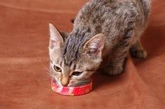 Κατανάλωση γατακιών Στοκ εικόνες με δικαίωμα ελεύθερης χρήσης