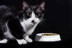 κατανάλωση γατών Στοκ εικόνα με δικαίωμα ελεύθερης χρήσης