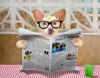 Κατανάλωση σκυλιών ο πίνακας με το κύπελλο τροφίμων Στοκ Εικόνα