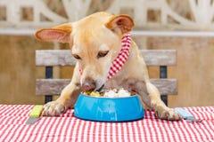 Κατανάλωση σκυλιών ο πίνακας με το κύπελλο τροφίμων Στοκ εικόνα με δικαίωμα ελεύθερης χρήσης