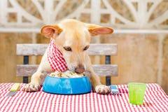 Κατανάλωση σκυλιών ο πίνακας με το κύπελλο τροφίμων Στοκ εικόνες με δικαίωμα ελεύθερης χρήσης
