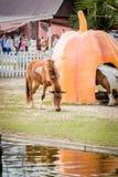 κατανάλωση του αλόγου Ταϊλάνδη χλόης πεδίων Στοκ Φωτογραφίες