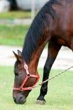 κατανάλωση του αλόγου χ Στοκ φωτογραφία με δικαίωμα ελεύθερης χρήσης