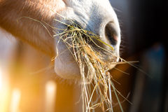 κατανάλωση του αλόγου χ Στοκ Εικόνα
