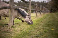 κατανάλωση του αλόγου χ Στοκ Φωτογραφίες