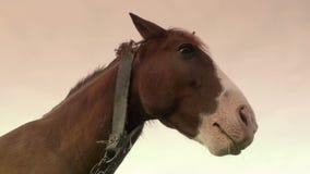 κατανάλωση του αλόγου &sigm φιλμ μικρού μήκους
