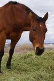 κατανάλωση του αλόγου &sigm Στοκ Φωτογραφίες