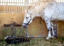 κατανάλωση του αλόγου &sigm Στοκ φωτογραφία με δικαίωμα ελεύθερης χρήσης