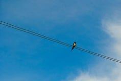 Καταπιείτε σε ένα καλώδιο Στοκ φωτογραφία με δικαίωμα ελεύθερης χρήσης
