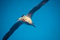 Καταπιείτε το πουλί Στοκ φωτογραφίες με δικαίωμα ελεύθερης χρήσης