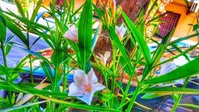 καταπληκτικά λουλούδι&al Στοκ εικόνες με δικαίωμα ελεύθερης χρήσης