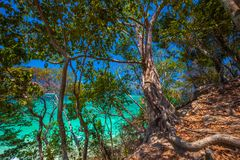 Καταπληκτικά τροπικά δέντρα στο νησί Tup AO Nang Στοκ εικόνες με δικαίωμα ελεύθερης χρήσης
