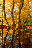 Καταπληκτικά χρυσά χρώματα φθινοπώρου στη δασική διαδρομή πορειών ζωηρόχρωμος πίνακας κολοκύνθης συλλογής φθινοπώρου Στοκ εικόνα με δικαίωμα ελεύθερης χρήσης