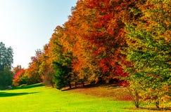 Καταπληκτικά χρυσά χρώματα φθινοπώρου στη δασική διαδρομή πορειών ζωηρόχρωμος πίνακας κολοκύνθης συλλογής φθινοπώρου Στοκ Εικόνα