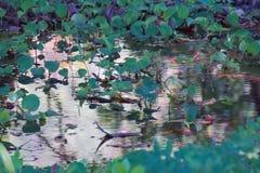 Καταπληκτικές αντανακλάσεις νερού σε μια πράσινη ταϊλανδική water-lily καλυμμένη λίμνη Στοκ Φωτογραφία