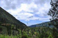 Καταπληκτικές θέες βουνού και μερικά δέντρα πεύκων στοκ φωτογραφία