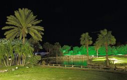 Καταπληκτική άποψη σχετικά με το πάρκο νύχτας με τα πράσινες δέντρα και τη λίμνη Στοκ Εικόνα