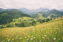 Καταπληκτική άποψη της θερινής αλπικής επαρχίας στα Καρπάθια βουνά, τοπίο φύσης στοκ εικόνες