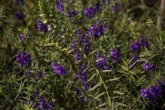 Καταπληκτική άποψη φύσης των πορφυρών λουλουδιών στοκ φωτογραφία με δικαίωμα ελεύθερης χρήσης