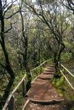 καταπληκτική δασική gomera βρ&omic Στοκ Εικόνες