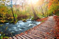 Καταπληκτική διάβαση τουριστών στο ζωηρόχρωμο δάσος φθινοπώρου, λίμνες Plitvice, Κροατία στοκ φωτογραφία