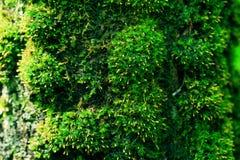 Καταπληκτική ξύλινη σύσταση βρύου του δέντρου στο δασικό φρέσκο πράσινο βρύο μετά από να βρέξει Ημέρα ηλιοφάνειας Αισθανθείτε φρέ στοκ φωτογραφία με δικαίωμα ελεύθερης χρήσης