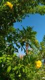 Καταπληκτικός κήπος στη Κύπρο στοκ φωτογραφία με δικαίωμα ελεύθερης χρήσης