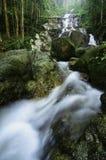 καταπληκτικός πέφτοντας απότομα τροπικός καταρράκτης υγρός και mossy βράχος, που περιβάλλεται από το πράσινο τροπικό δάσος Στοκ Φωτογραφίες