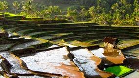 Καταπληκτικός τομέας ρυζιού πεζουλιών στοκ φωτογραφία